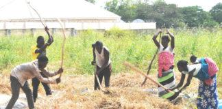 Wheat farmers in Nigeria